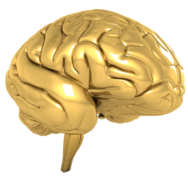 Top 10 Brain Supplements - TheSupplementReviews.org